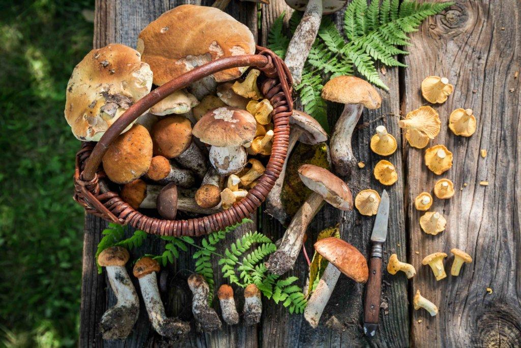 2 recettes italiennes d'automne aux champignons
