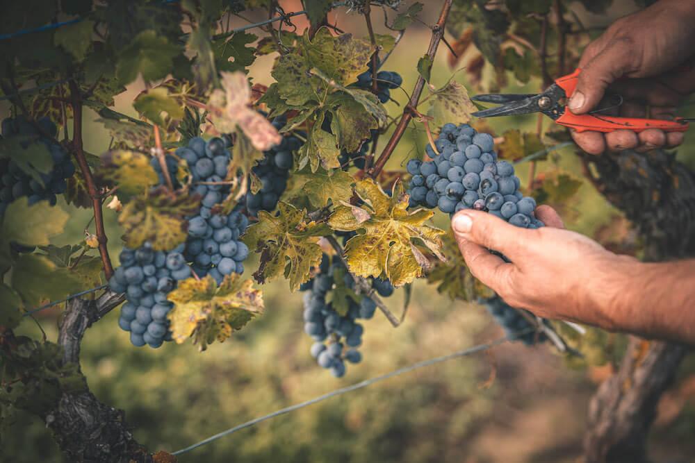 vins italiens il ristorante