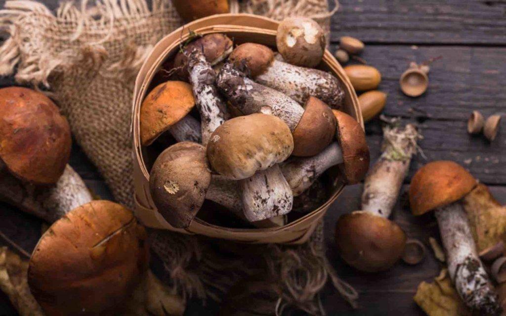 les champignons dans la cuisine italienne - une